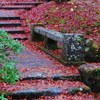 Autumn leaves on stone steps