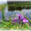 Flower beside rice field