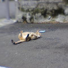 Cat (Yokosuka, Lensbaby)
