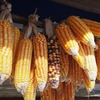 Corn is one of majour staple food