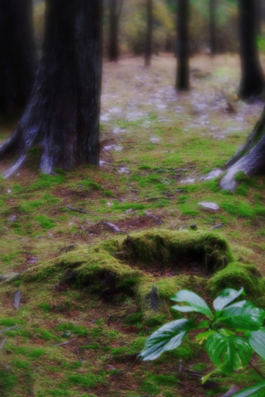 Garden in Furumine-shrine
