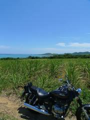 Sugarcane & HONDA Phantom200