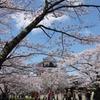 お花見客と白石城