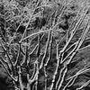 都会の樹氷