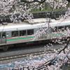 桜の中の仙山線