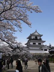 桜と白石城天守閣