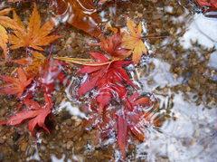 水溜りの落葉