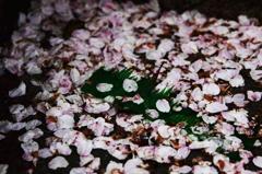 春花や酔狂どもが夢の跡