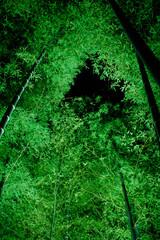 竹のライトアップ②
