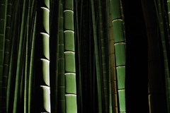 竹の美しさ