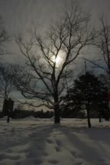 冬の木(旭川)