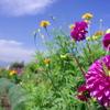 花と虫と空と