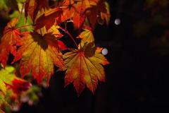 紅葉と夜遊び