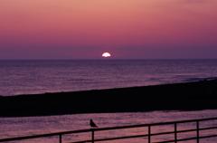 カモメと夕日を眺めてた