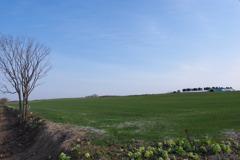 春の牧草地