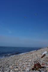 カモメと浜