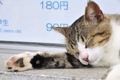 ゆるい猫(エスカー前)