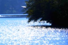 湖面の煌き