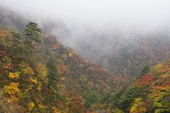 霧らふ彩り