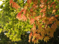 秋の始まり