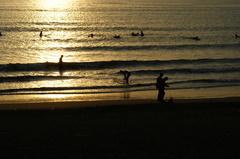 サーファーと犬の散歩