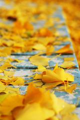 秋の終わりのベンチ