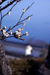 伊豆の初春