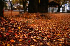 落葉のうみ