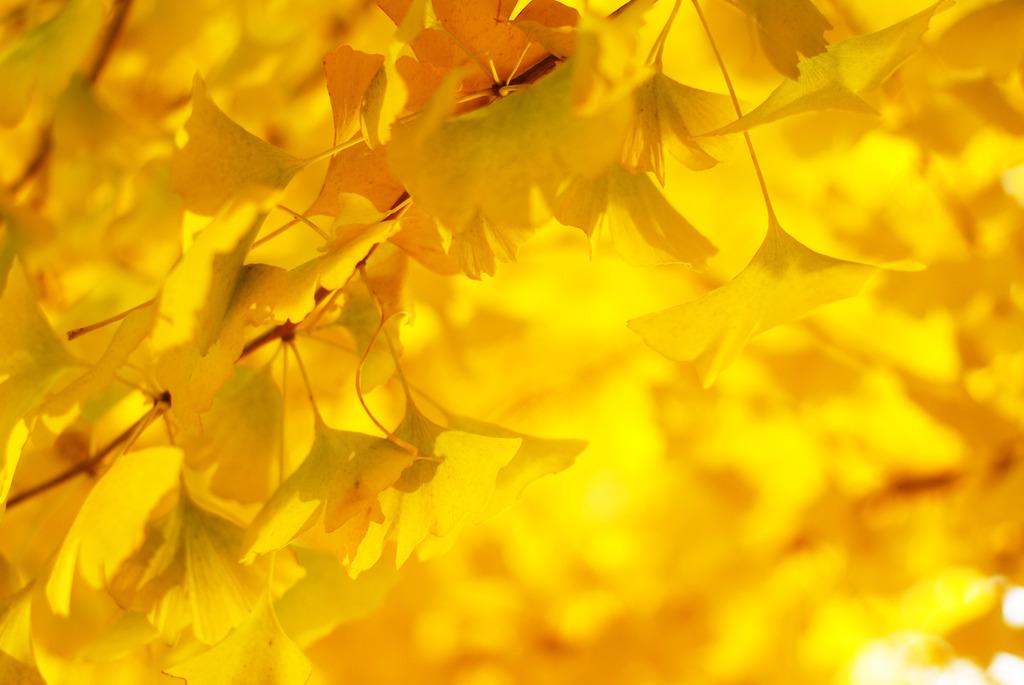 金色に輝く