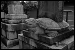 亀 (東寺にて)