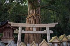 Tree of God