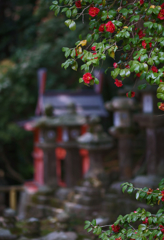 In Kasuga Taisha Shrine (3)