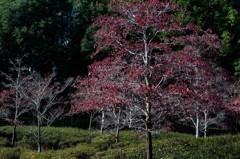 Landscape seen at a park (3)