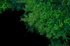Green gradation
