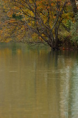 Pond and trees (1)