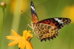 Beautiful butterfly (2)