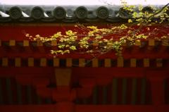 In Kasuga Taisha Shrine (1)