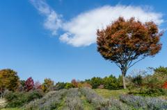 Scenery of autumn sky (NO2)