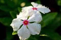 雨あがりの朝