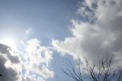 庭から見上げた空
