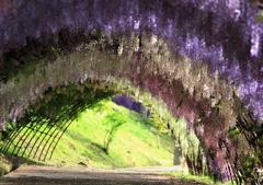 藤のトンネル 定番