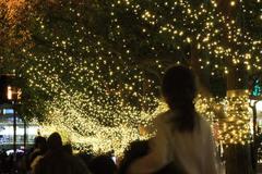 蛍tree