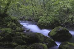 石苔のある流れ