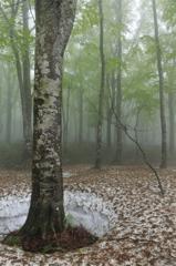 雨の八甲田Ⅱ