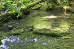 苔色の流れ2