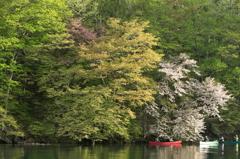 東湖のカヌー