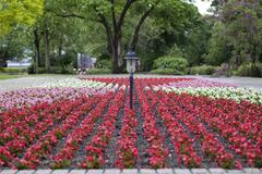 花のジュータン