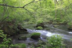 2013年5月27日の奥入瀬渓流
