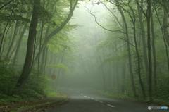 靄の樹海ライン