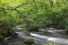 新緑香る渓流